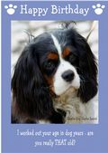 "Cavalier King Charles Spaniel-Happy Birthday - ""Are You Really THAT Old"" Theme"